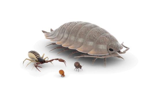 3D-Animationen von Bodentieren