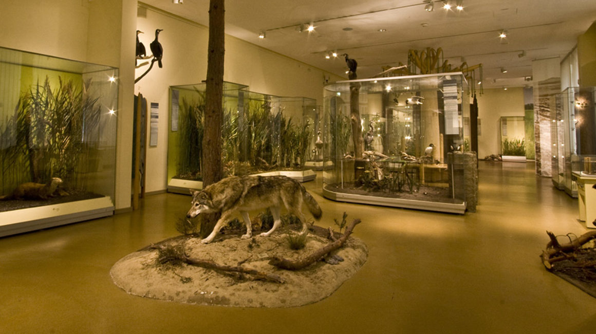 Video: © Senckenberg Museum für Naturkunde Görlitz, photo: © Senckenberg Museum für Naturkunde Görlitz / Robert Binas