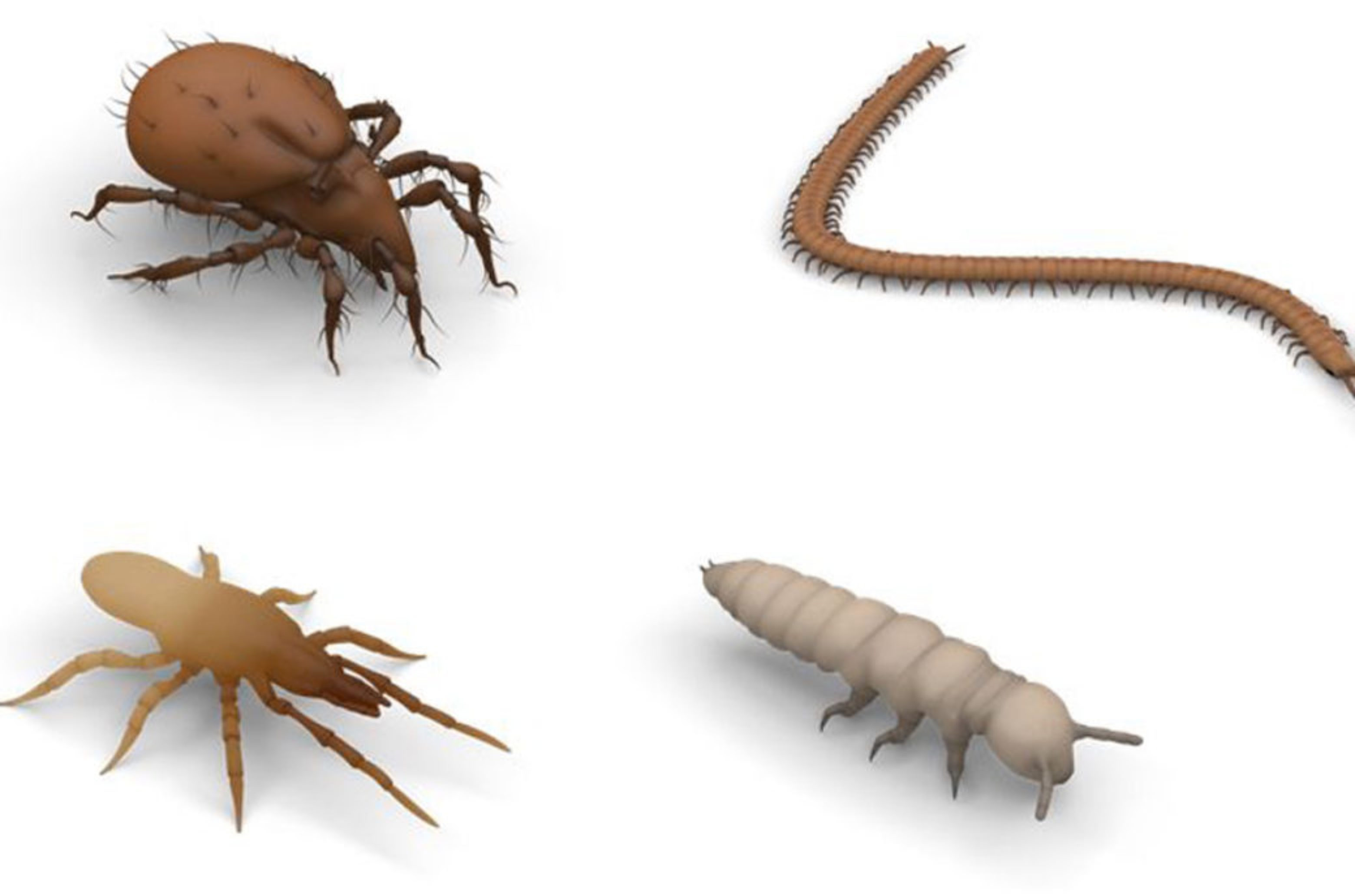 For the VR application, soil animals were reconstructed in 3D according to scientific specifications.