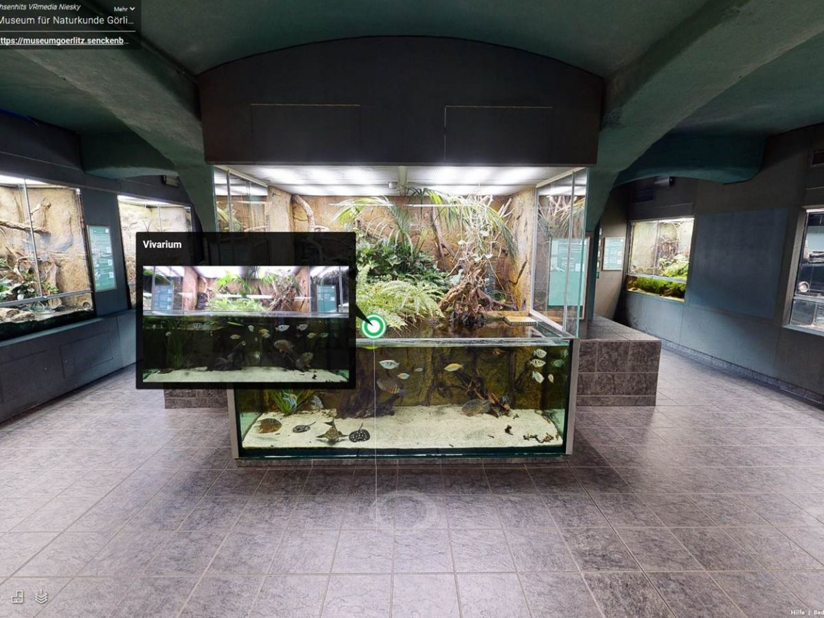 Virtueller Museumsrundgang bei Senckenberg in Görlitz