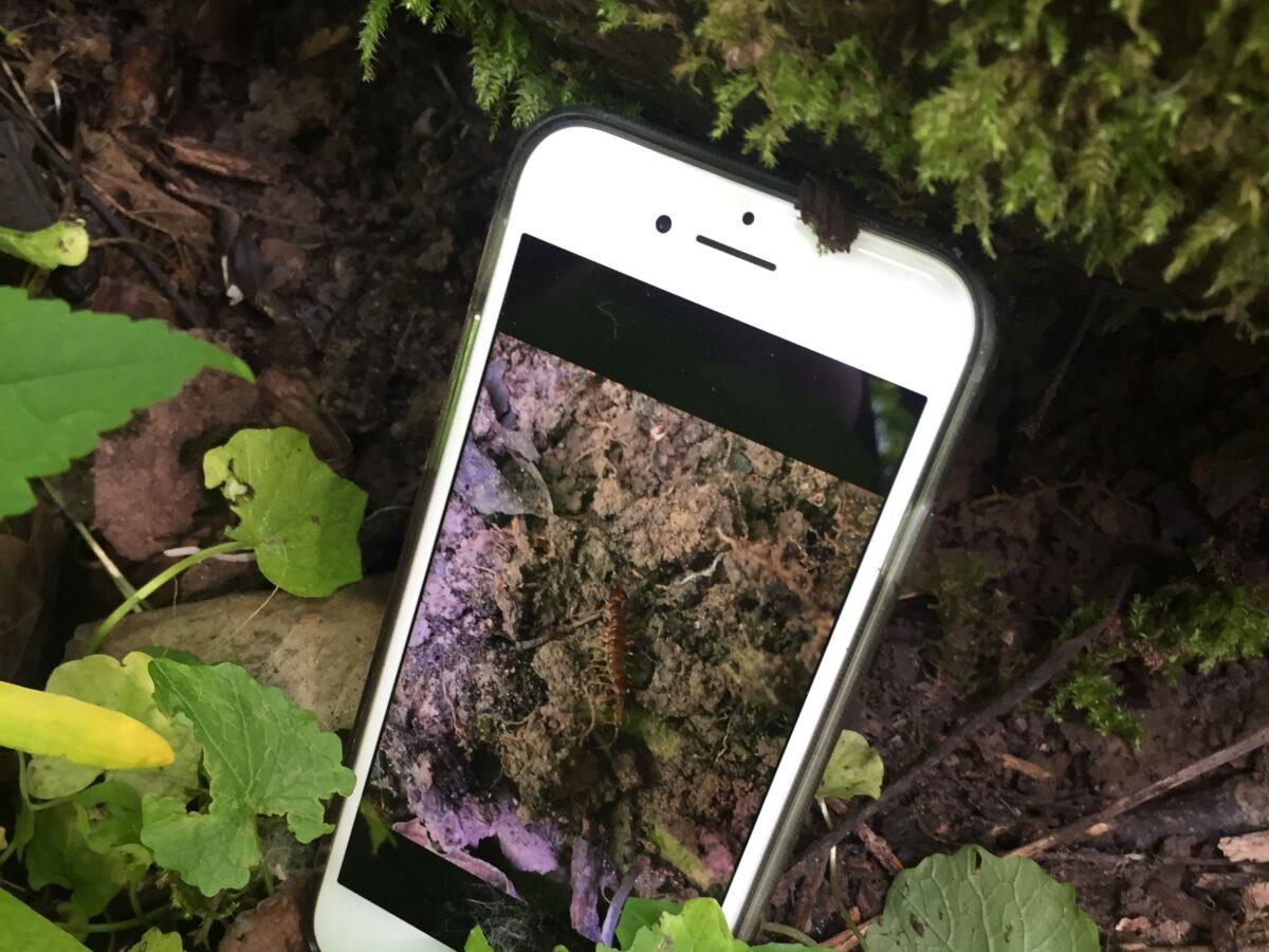 Genau hingeschaut: mit der App BODENTIER hoch 4 kann jede und jeder Bodentiere bestimmen
